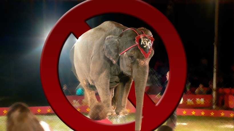 Should animals be banned in the circus?