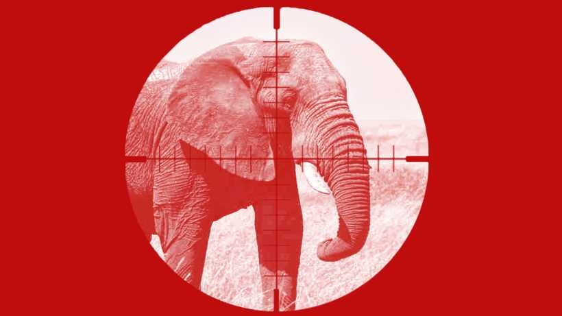 Ban hunting in Botswana forever: petition