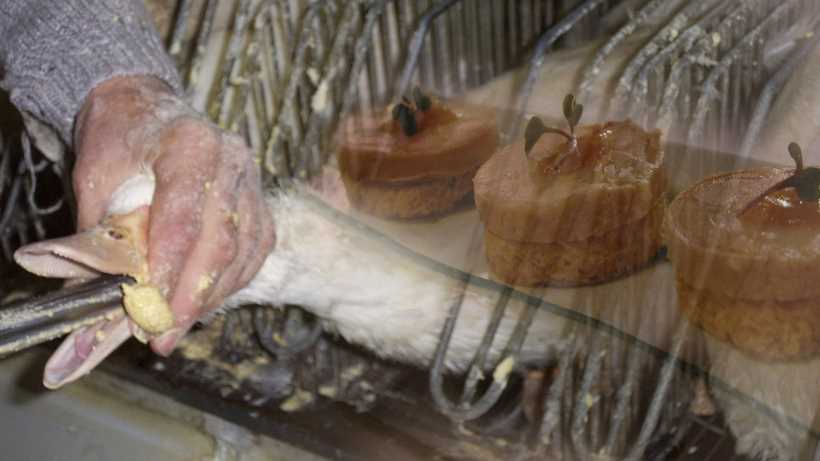Foie gras controversy: should it be banned due to the cruelty involved in its production?