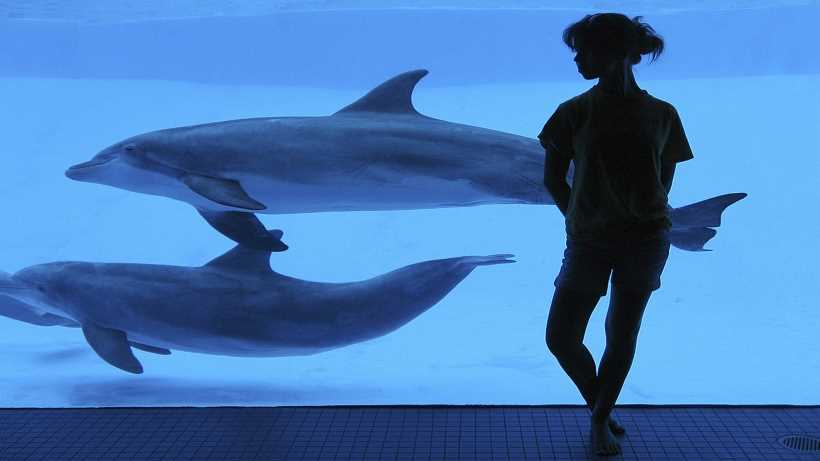 Dolphins in captivity. Pros and cons of dolphinariums.