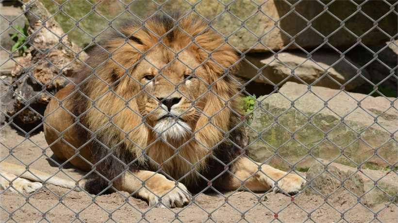 Zoos should be banned essay checker